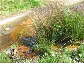 Ground affected by acid mine drainage